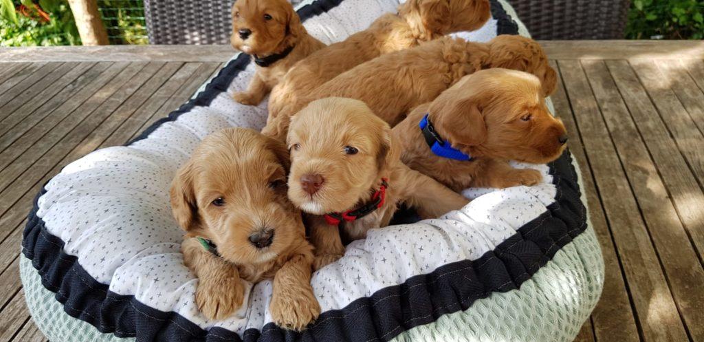 pups-4weken