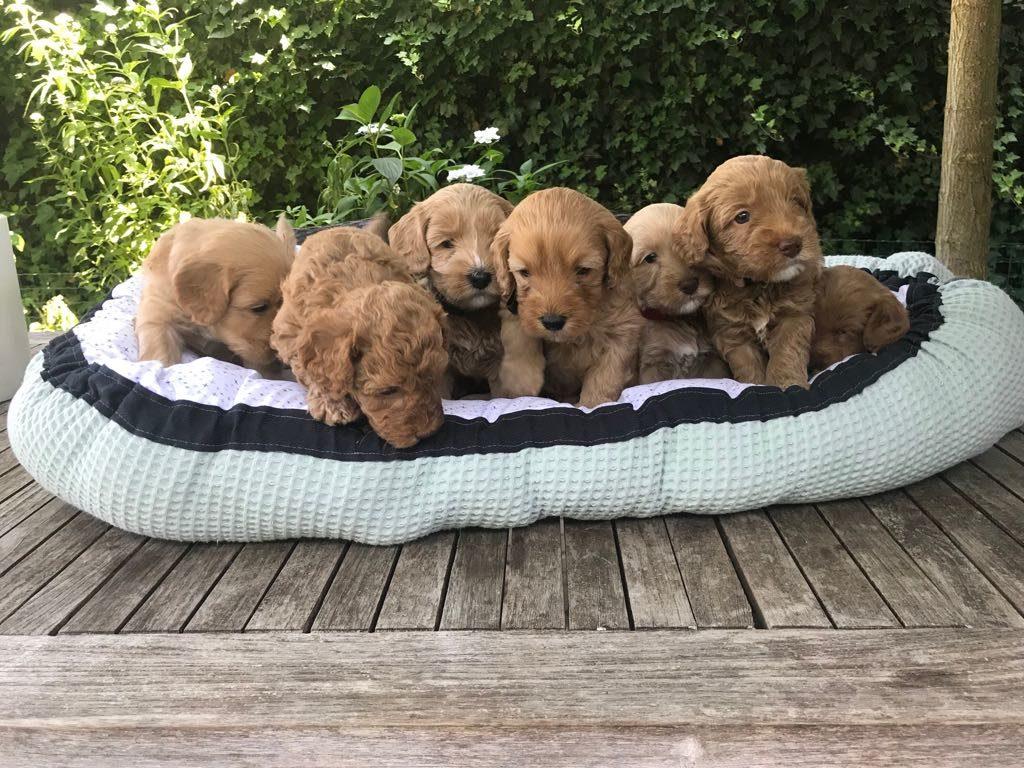 pups-5weken