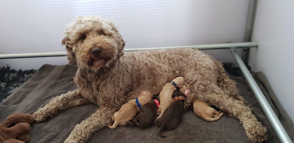 20180802_geboorte-pups